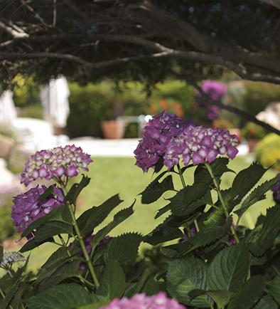 Softscape: Fornitura di piante, Installazione, Cura e Manutenzione.