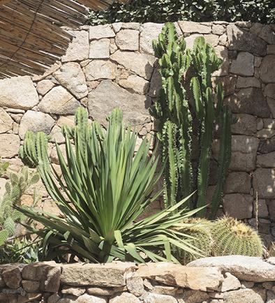 angolo delle piante grasse